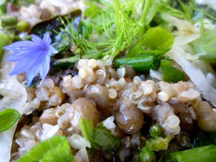 salade-lentille-quinoa (2)