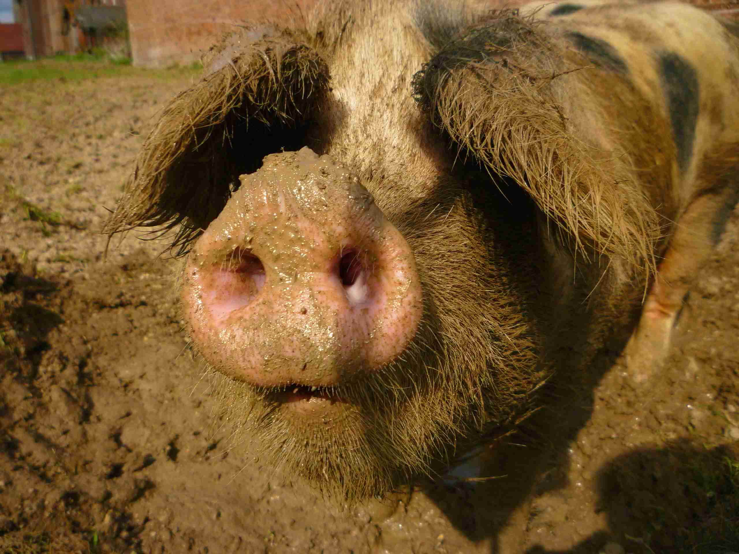 porc-site (6)
