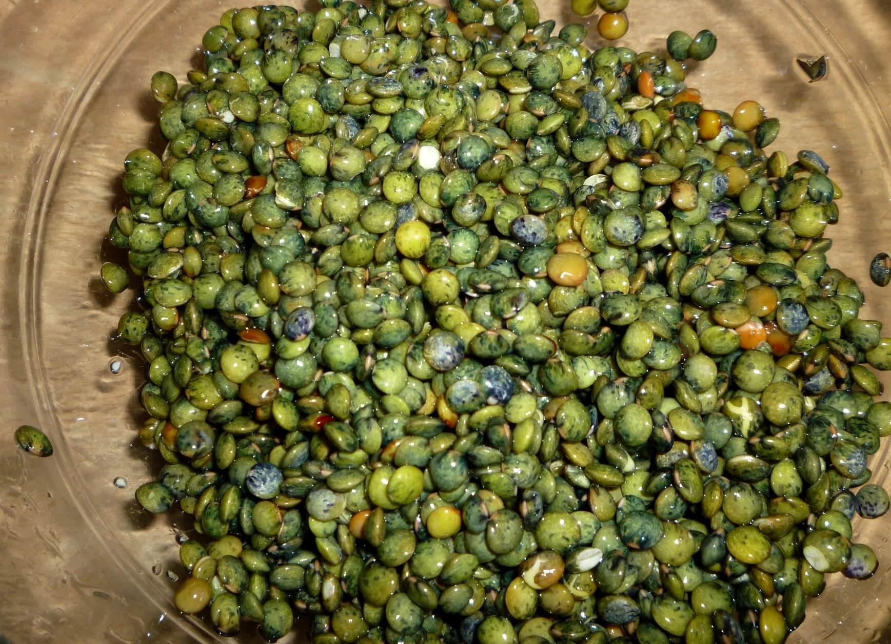 salade-lentille-quinoa (4)